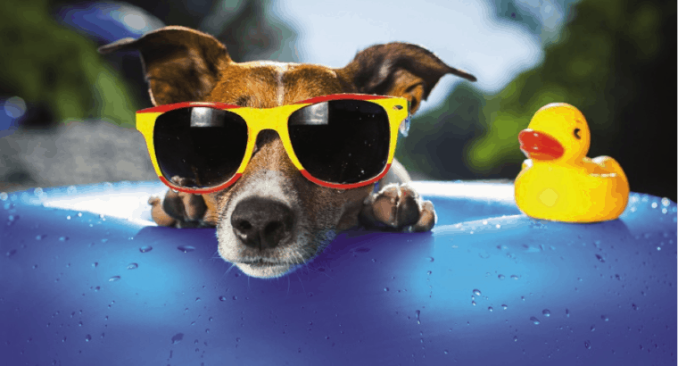 10 Summer Pet-Safety Tips for Pet Sitters and Pet Owners